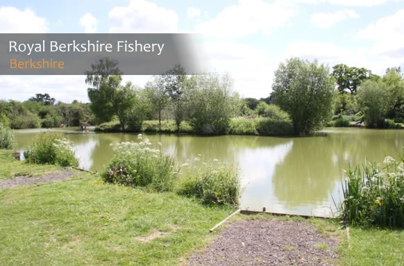 Royal Berkshire Fishing Lakes