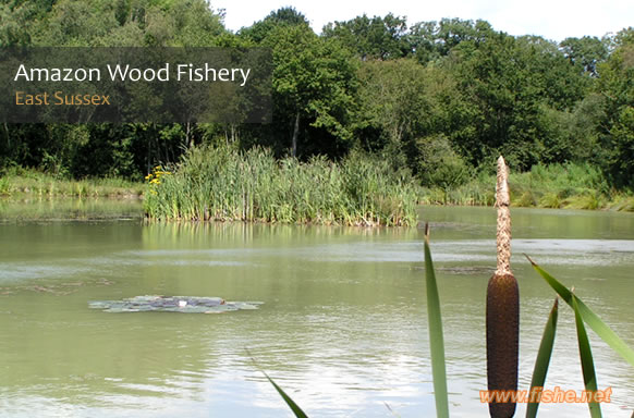 Amazon Wood Fishery thumb