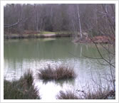 Iden Wood Fishery