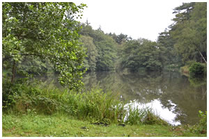 Normanhurst Lake