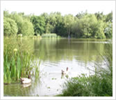 Piltdown Pond - Copthorne and District Angling Society