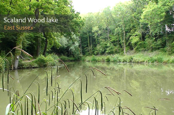 Scaland Wood Lake Fishery