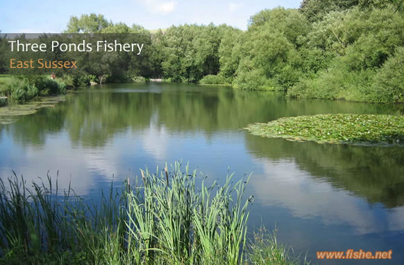 Anglers tips for three ponds fishery for Pond fishing tips
