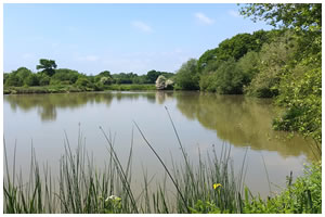 Nyewood Top Pond - Nyewood
