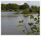 Watmore Farm Lake
