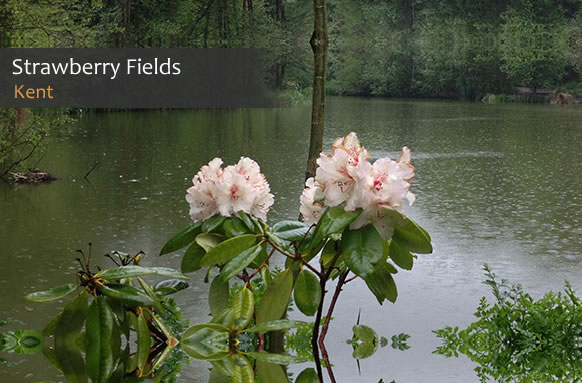 Strawberry Fields Carp Fishing Lakes thumb