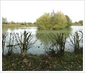 Tricklebrook Coarse Fishery