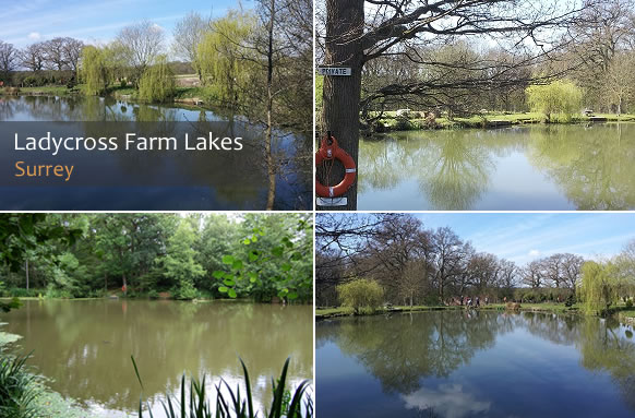 Rookery Angling Club Fishery thumb