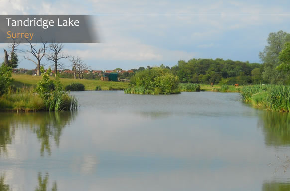 Anglers reviews on tandridge lake for Quarry lakes fishing