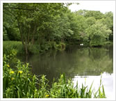 Tillingbourne Coarse and Trout Fishing Lakes