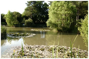 Alderwood Ponds Coarse Fishery