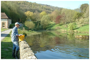 Duncton Mill Trout Fishing Lakes