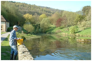 Duncton Mill Trout Fishery