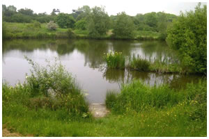 Five Oaks Fishing Lakes
