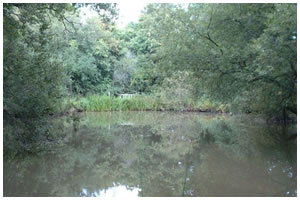 Frylands Pond