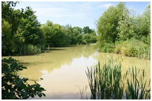Woodpeckers Fishery